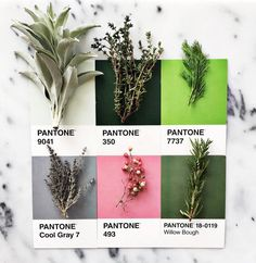 It's Not Easy Being Green: Pantone Names 'Greenery' Color of