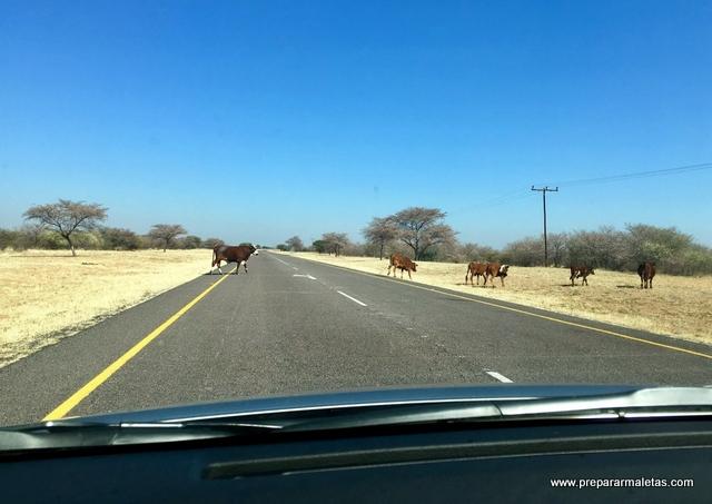 Botsuana en coche