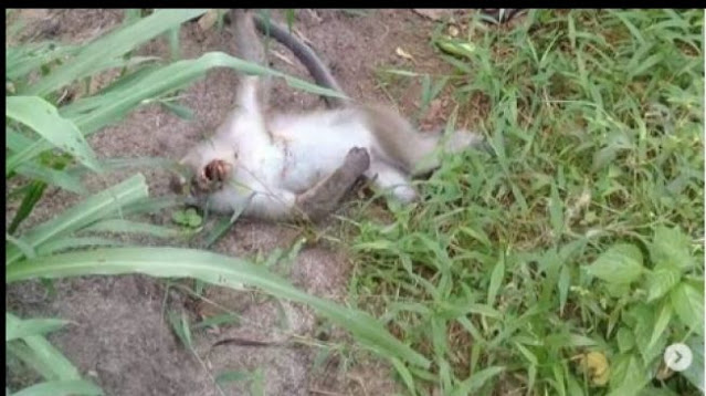Ditegur Pamer Tembak Monyet, Remaja: Kenapa Gak Urusin Pulau Komodo
