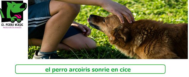 el perro arcoiris sonrie en cice-El Perro Verde-Protectora De Animales1