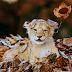 Ένα παιγνιδιάρικο λιονταράκι