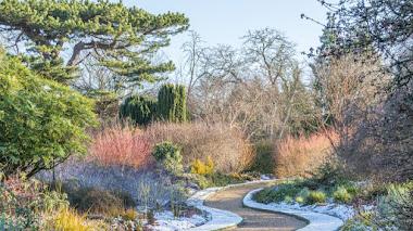 Winter Garden en el Botánico de Cambridge: oda al invierno