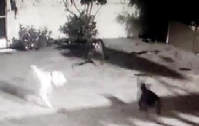 बूढ़ा फार्म में घर में आये गुलदार को कुत्तों ने खदेड़ा - newsonfloor.com