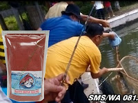 Umpan Khusus Ikan Mas