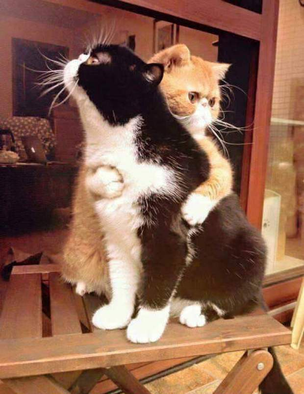 Funny cats - part 198, cat photos, best funny cat pic, adorable cat picture