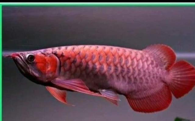 Santri dan Ikan: Berapa Hargamu?