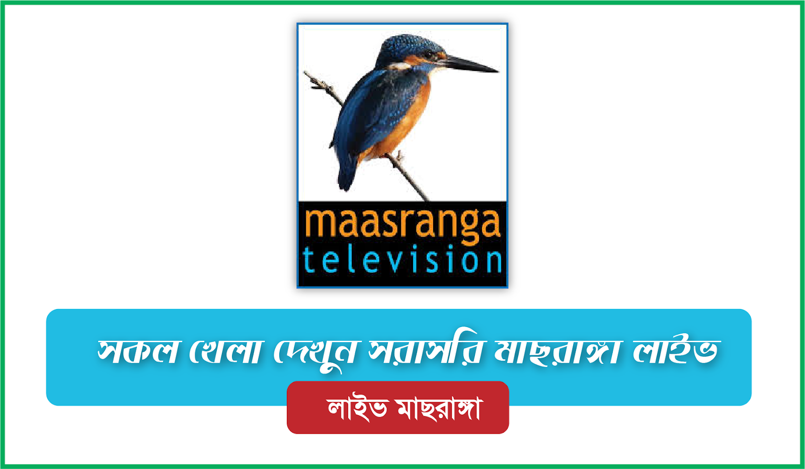Maasranga TV Live Streaming | Watch Maasranga TV Live
