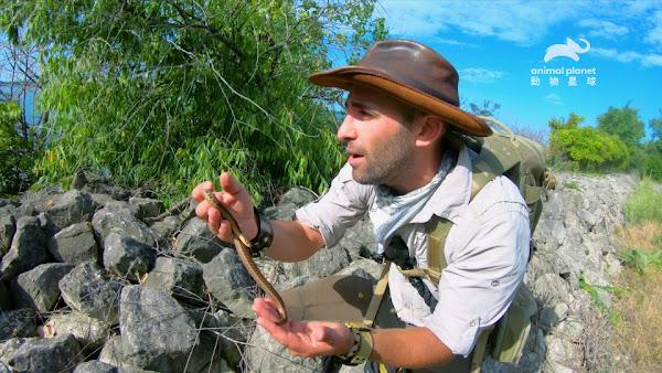 卡悠提,彼得森在島上搜尋不到十五分鐘,就發現至少3隻小帶蛇正在做日光浴