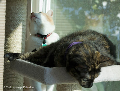 The Reat Cats on cat tree_3
