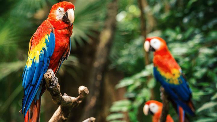 parrot insurance kinston nc