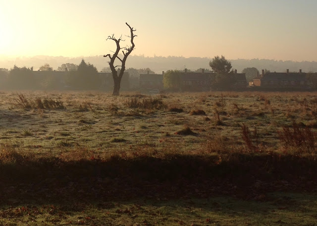 A rough field with a dead tree in it on a frosty, misty morning