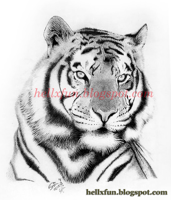 Drawings, Movies... And more: Drawing Tiger