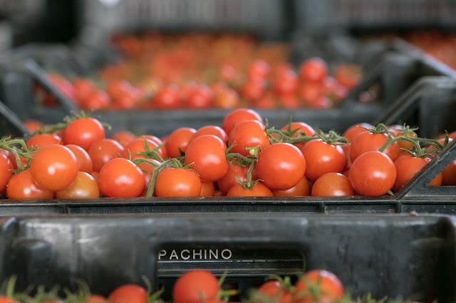 Consorzio di tutela del Pomodoro di Pachino IGP