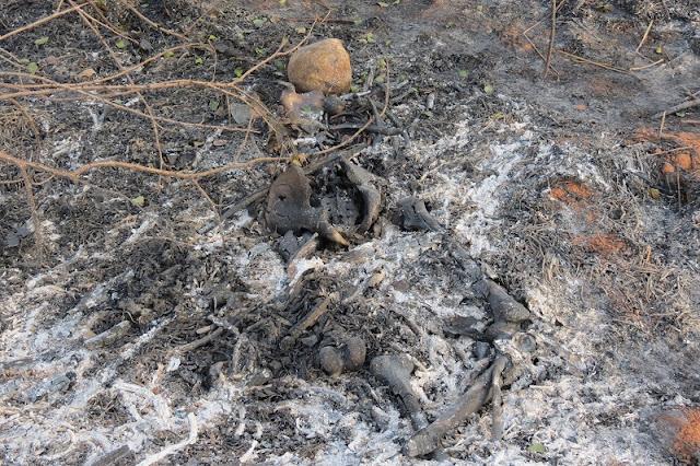 Ossada Humana foi localizada em área de APP próximo a Dracena