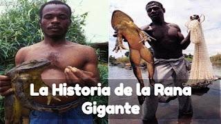 Rana Gigante