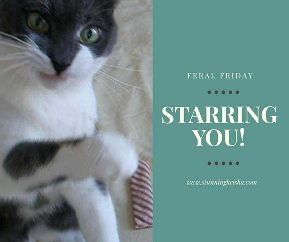 Feral Friday Starring You!