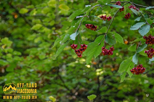 Interesting flora specimens at Nidze mountain, Macedonia