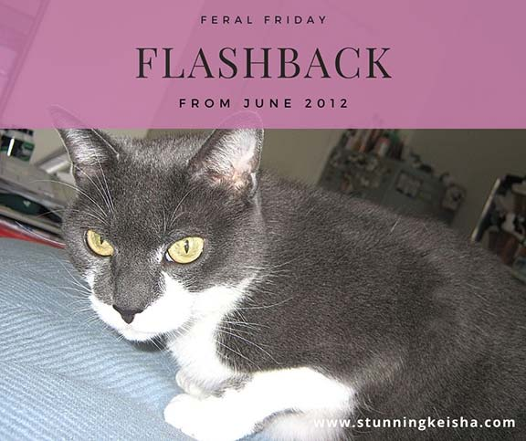 Feral Friday Flashback: Uphill Battle