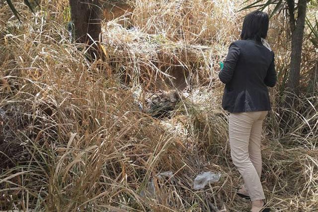 Encontraron cadáver descompuesto y sin identificación en La Yaguara