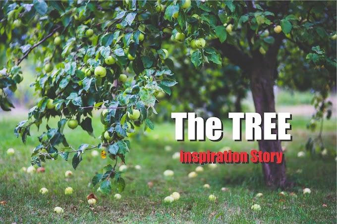 The Tree : Inspiration Story