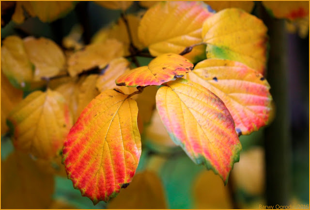 kolorowe liście jesienią