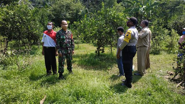 Babinsa Koramil Polanharjo berikan motivasi kepada petani jeruk