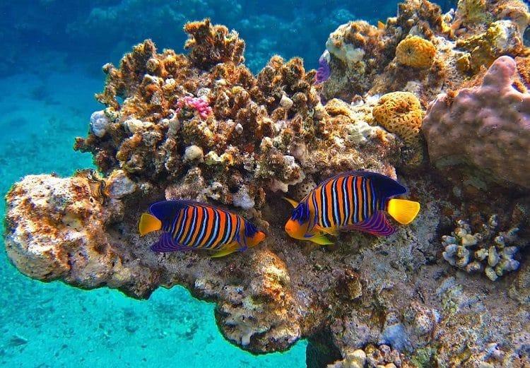 Red Sea Riviera Egypt 4