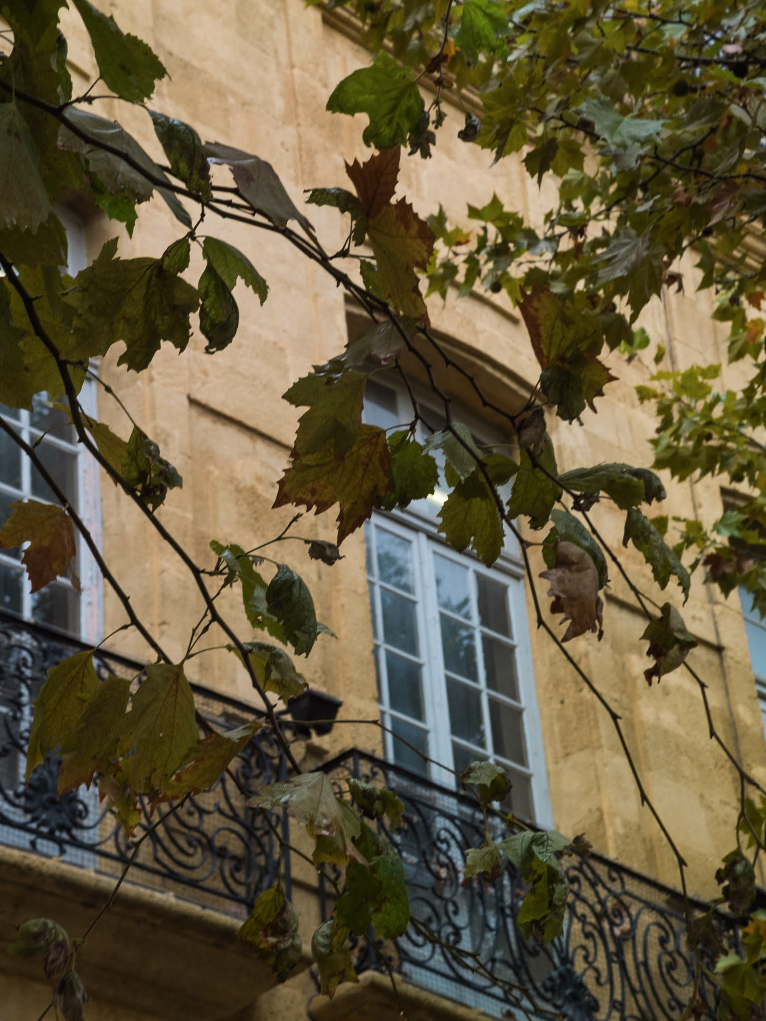 Windows, balconies and plane tree branches on Cours Mirabeau in Aix-en-Provence.
