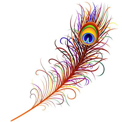 vector de una pluma de un pavo real