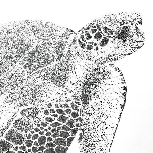 01-Sea-Turtle-Kelsey-Hammerton-www-designstack-co