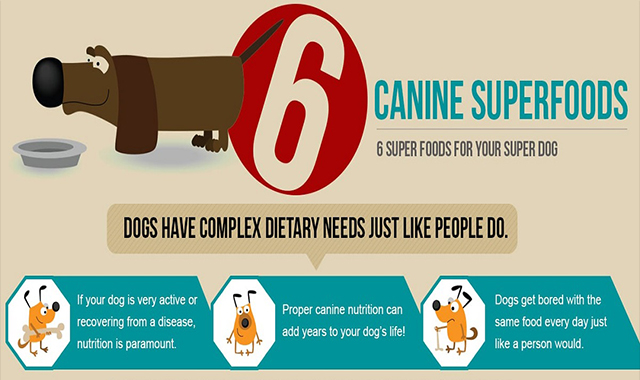 Top 6 Foods for Super Dog #infographic