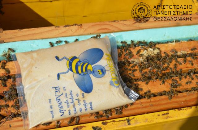 Η μελισσοτροφή που θεραπεύει τη βαρρόα. Βγήκαν τα αποτελέσματα, νέα αποκαλυπτική έρευνα απο το ΑΠΘ...