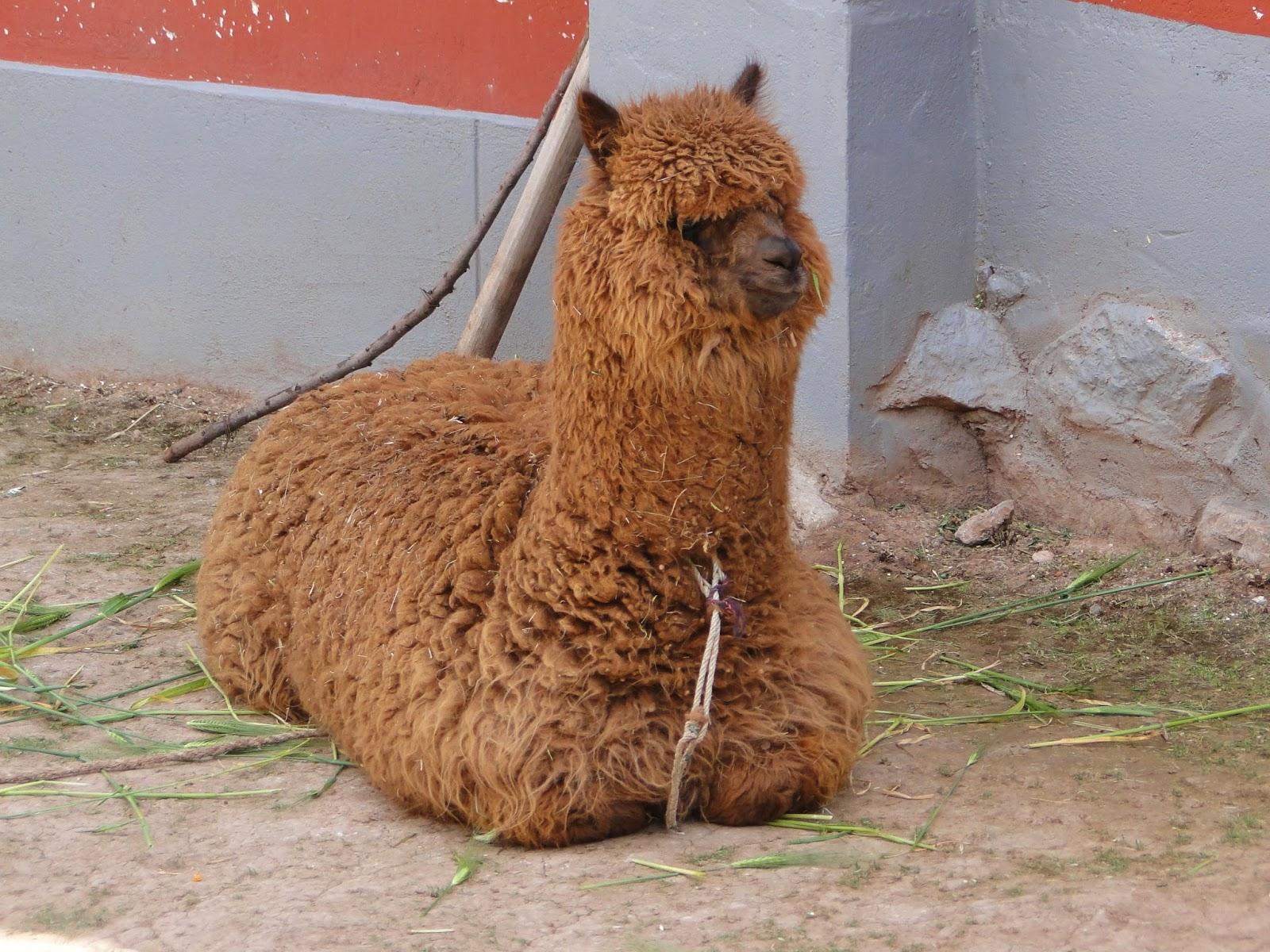 CHINCHERO, MORAY, SALINAS DE MARAS, OLLANTAYTAMBO - Cusco, Peru