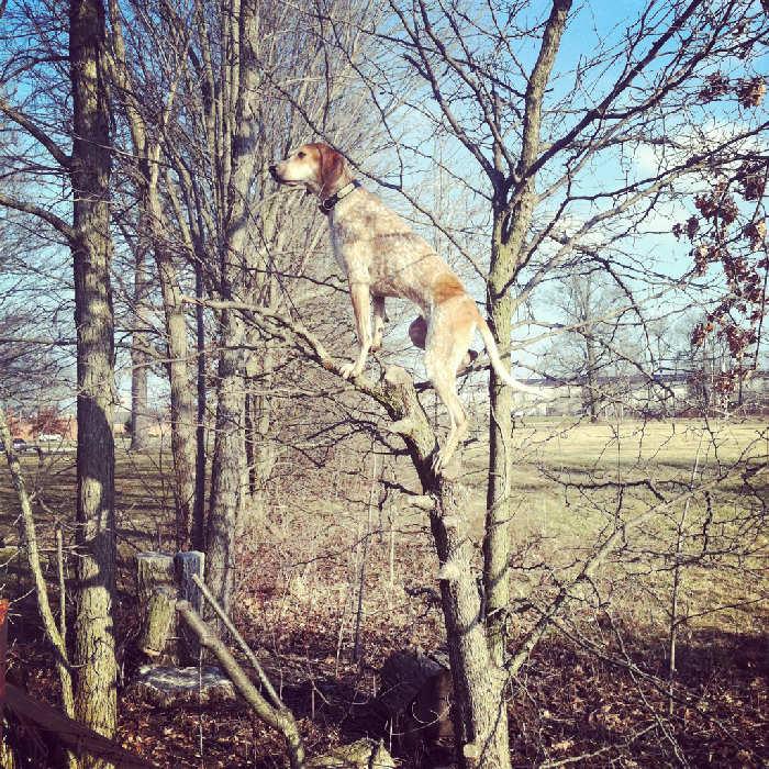 Послушная собака 14