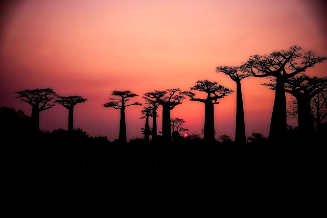 tourism in madagascar 2020 vacation