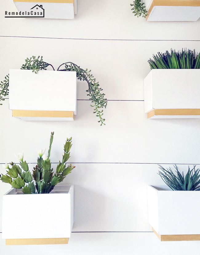 Plant gallery wall