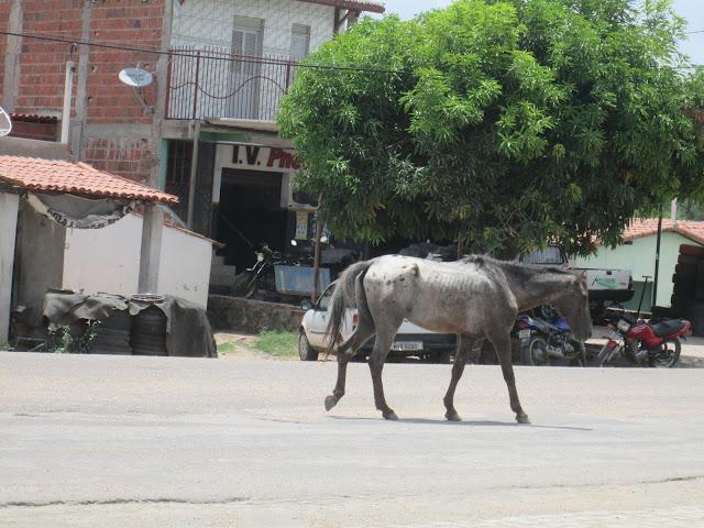 Resultado de imagem para  cidade de Ipanguaçu