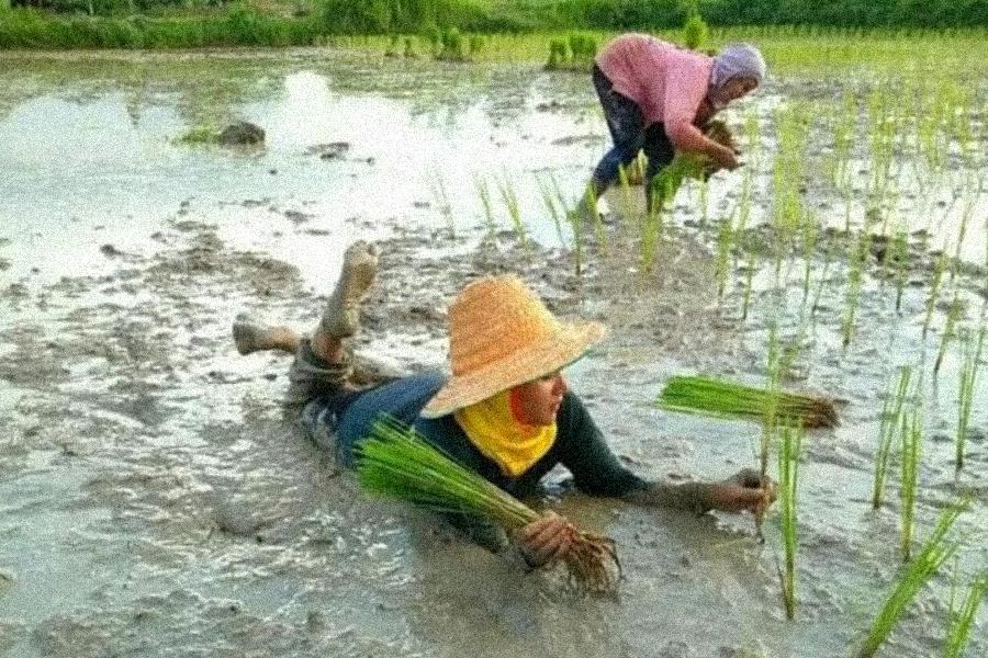 Bertani Lewat Blogwalking