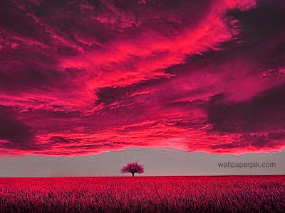 dawn tree sunset colorful wallpaper hd
