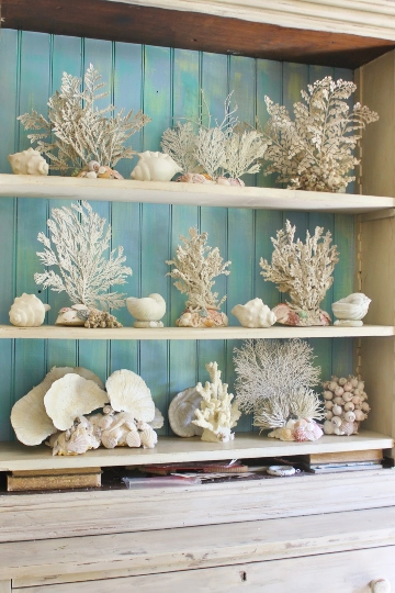Display Cabinet Coral Sea Fan Collection