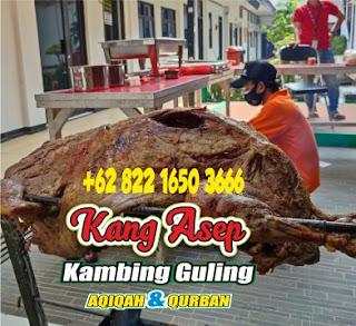 Jual Kambing Guling di Antapani Bandung,jual kambing guling di antapani,kambing guling di antapani,kambing gulingantapani,kambingguling bandung,kambing guling di bandung,kambing guling antapani bandung,kambing guling di antapani bandung,