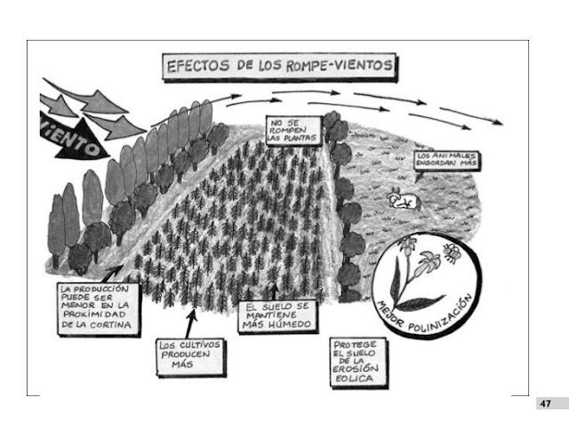 Barrera natural para rompero el efecto de los vientos en las cosechas y producción animal