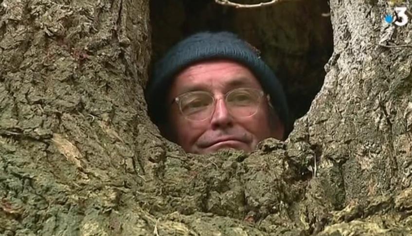 Bretagne (29) : Indigné par la gestion du système de santé, un médecin se confine dans un arbre à Fouesnant