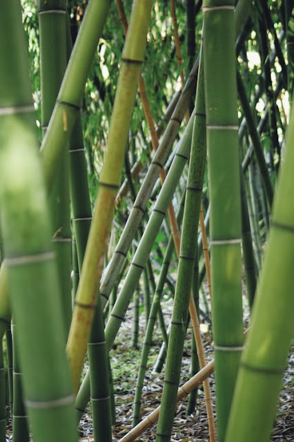 lifestyle girl Bambus - bamboo