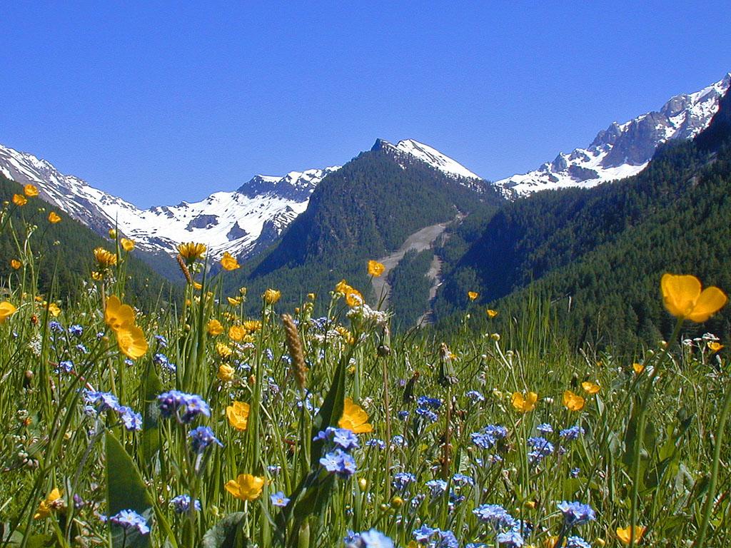 Fond ecran printemps montagne fonds d 39 cran hd for Image ete fond ecran