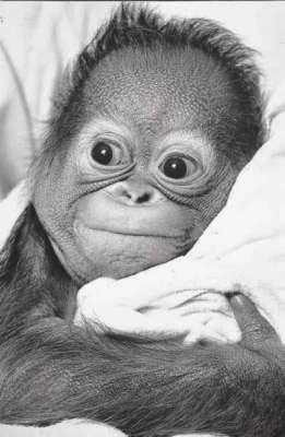 Cute Baby Animal Pictures Wallpapers Funny Baby Monkeys Funny Animal