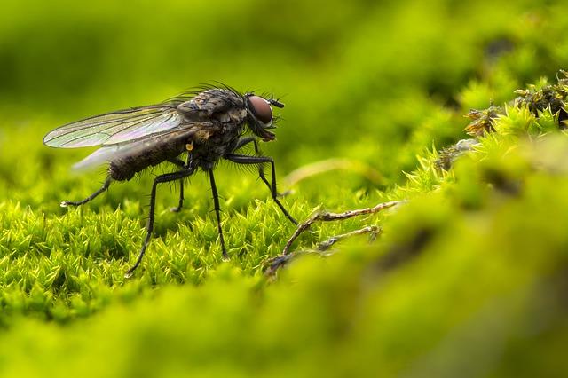Diantara binatang yang banyak merusak tanaman adalah dari golongan serangga (insekta). Salah satu alasannya adalah bahwa spesies golongan serangga paling banyak diantara kingdom makhluk hidup binatang (animalia). Serangga termasuk golongan binatang bersegmen (antropoda) yang mempunyai tiga bagian pokok tubuh yaitu kepala (caput), dada (thorax) dan perut (abdomen), berkaki enam (disebut juga heksapoda) dan sebagaian besar bersayap. Posisi kaki dan sayap (bila ada) berada di segmen dada.