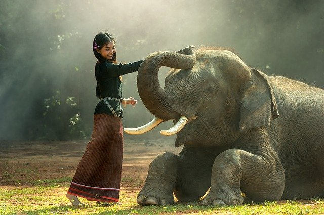 Arrêtons la capture d'éléphanteaux pour l'exportation en France