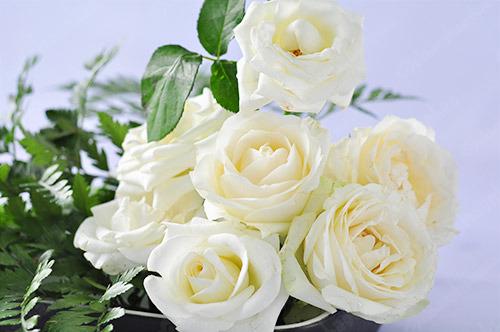 ý nghĩa hoa hồng trắng 5