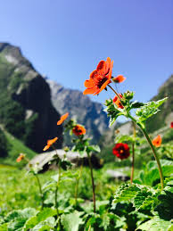 valley-of-flowers-national-park
